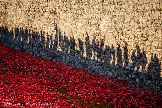 Poppies and Shadows - creative photography