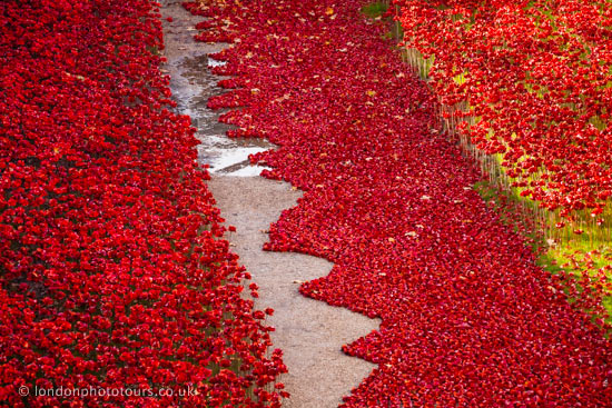 ceramic poppies at the tower of london 2014 - abstract photograph