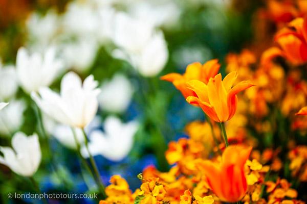 Online Photograhy Course - Creative Apertures